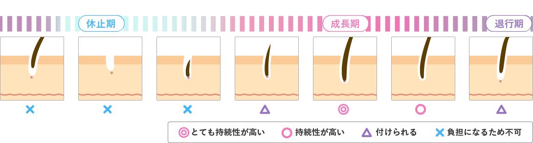 毛周期の説明画像